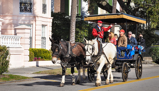 Kem, a tour guide for Palmetto Carriage Works, drives his carriage along the Charleston Battery.
