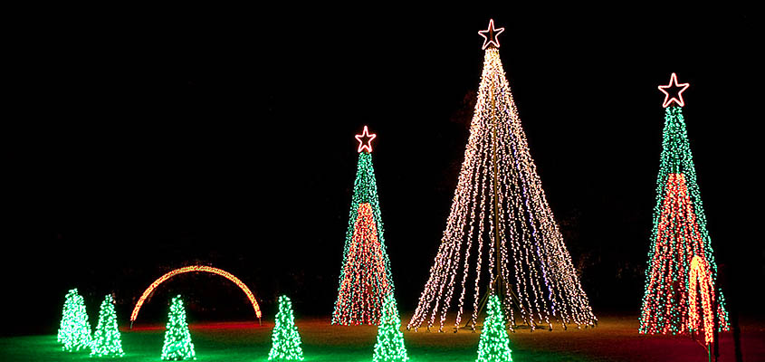 Charleston Festival of Lights Dancing Tree Display. Image courtesy of Charleston County Parks. All Rights reserved.